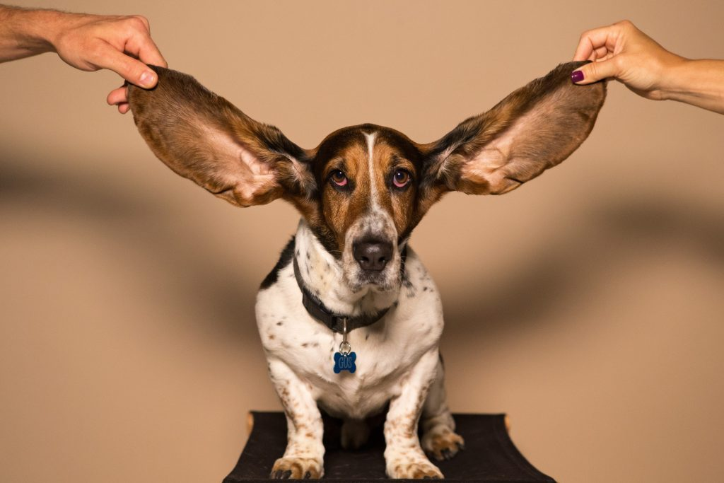 big dog ears does your audio need fixing